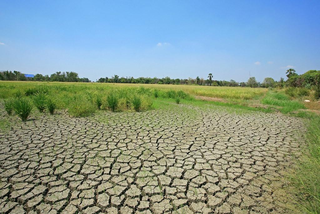 暖化臨界點更近了 研究:土壤濕度是陸地吸碳力關鍵