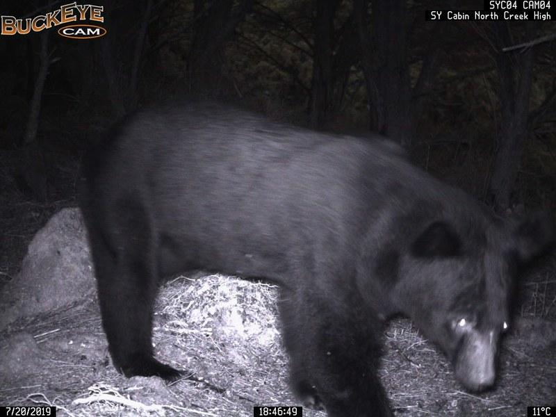 台東林管處啟用預警系統 成功驅離黑熊