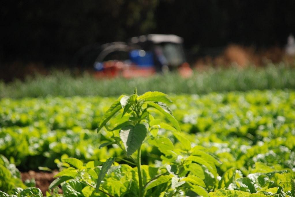 升溫不超過2°C的變數 全球農業氮肥「一氧化二氮預算」首出爐